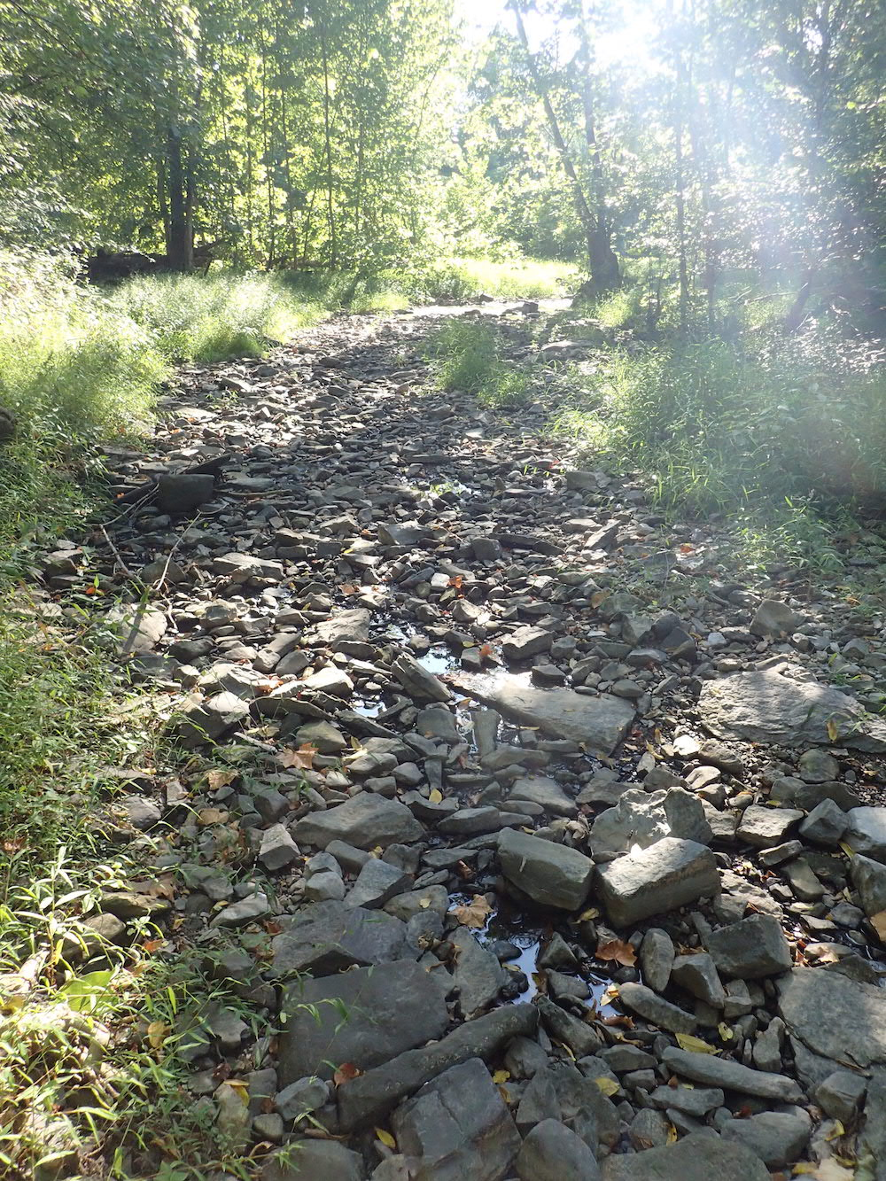A dry streambed.