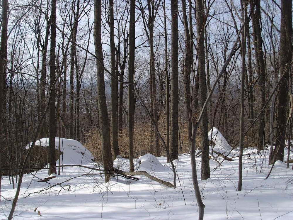 View from the Alpine Trail, overlooking a stand of beech trees toward the city of Allentown