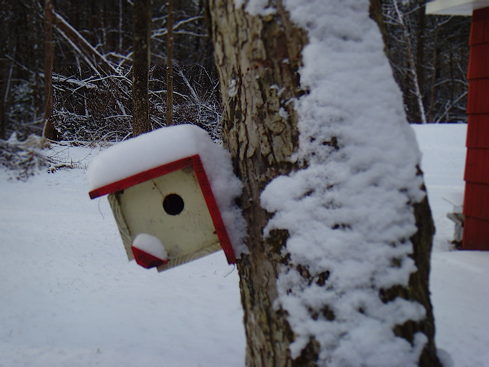 Taken earlier in the year, one of seven nest boxes suitable for wrens