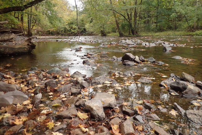 Stream in fall