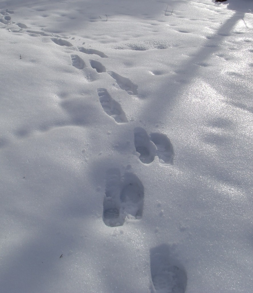 Frozen footsteps