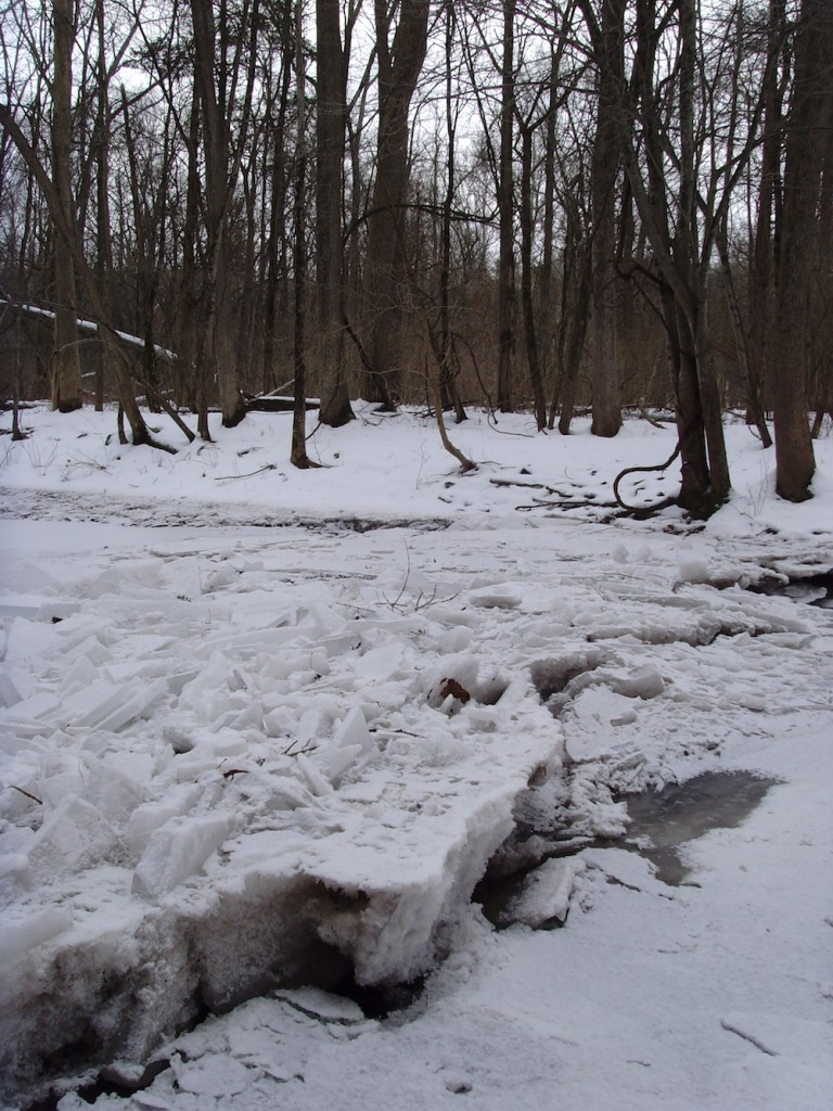An ice dam on the Swamp Creek