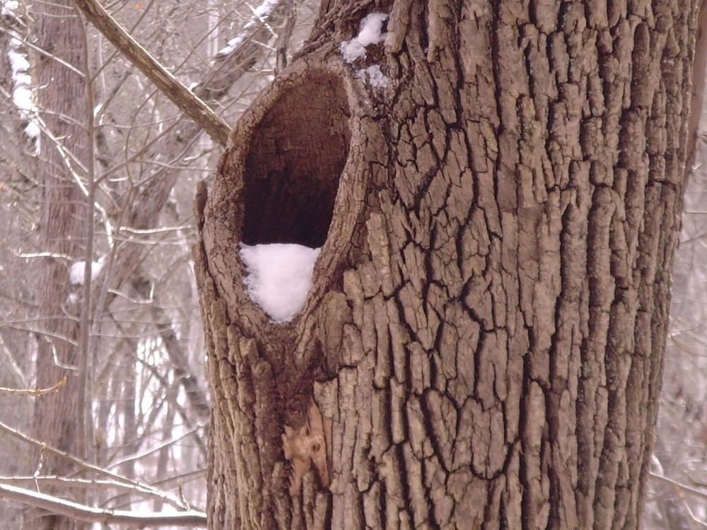 shelter_hole