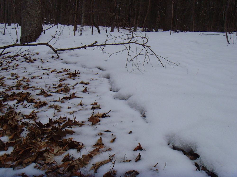 Snow/leaf line